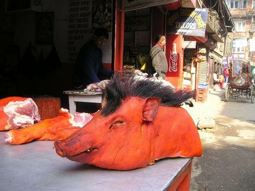 Nepalas,kiaulė,galva,mėsininkas,mėsininkas,skerdyklos,žaliavinis,raudona,dažytos,spalva