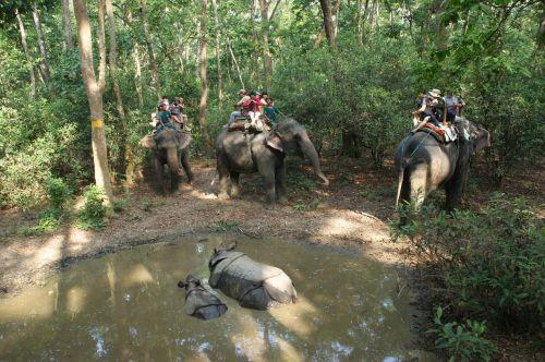 Nepalas,Rhino,Nacionalinis parkas,chitwan,drambliai,važiuoti,turistai,menas,miškas,medžiai,vanduo,tvenkinys
