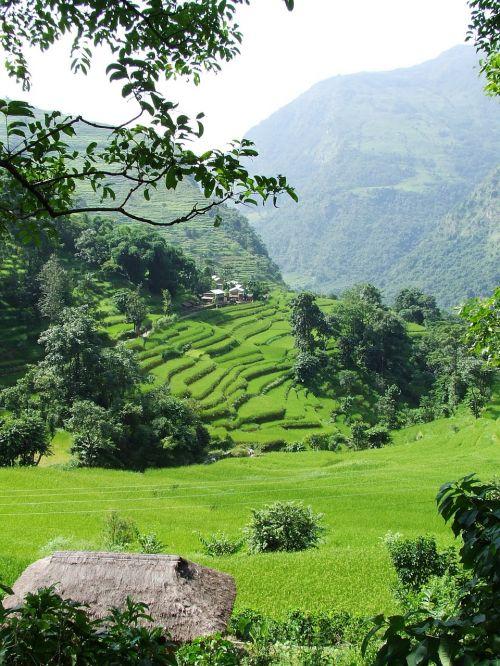 nepal annapurna trekking