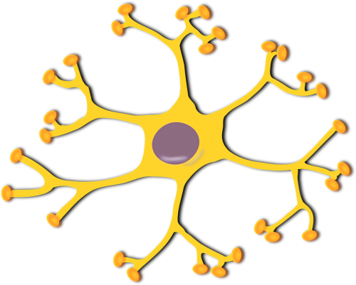 nerve cell neuron biology