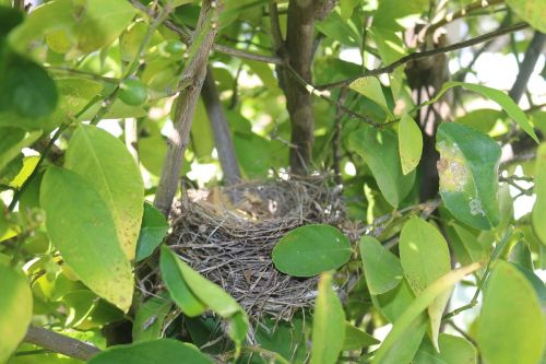 nest,bird's nest,nature,bird nest,wildlife,outdoor,summer,wooden,twig,tree