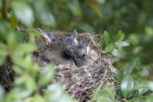 nest bird birds