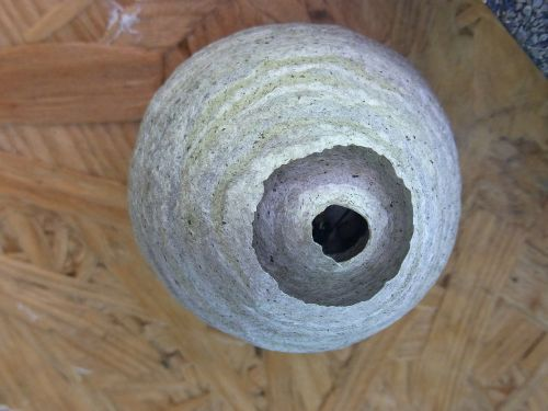 nest wasps bees