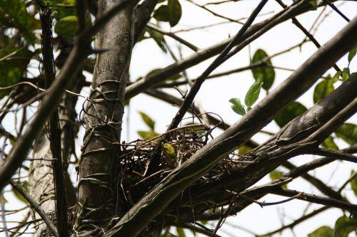 nest empty tree