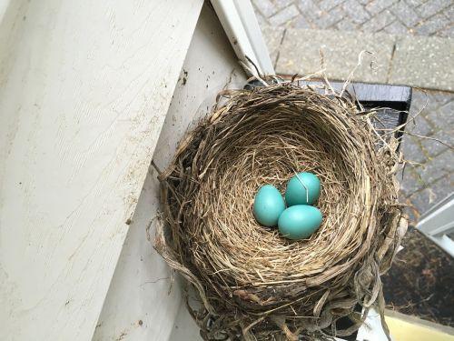 nest spring bird