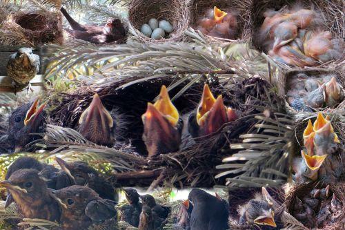 nest bird's nest young birds