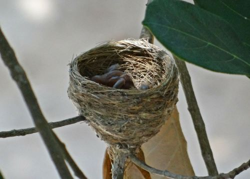 nest chicks hatched
