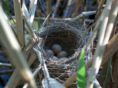 nest bird's nest hatchery
