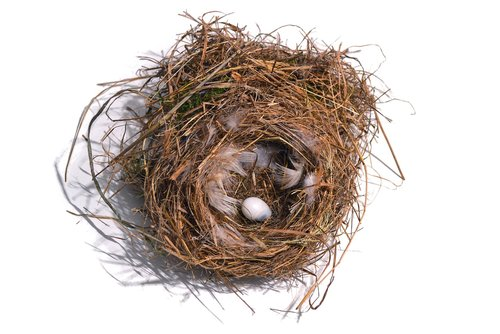 nest  bird's nest  bird