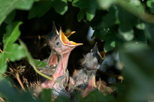 nest bird's nest nesting