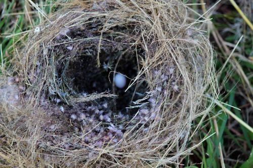 nest paige egg