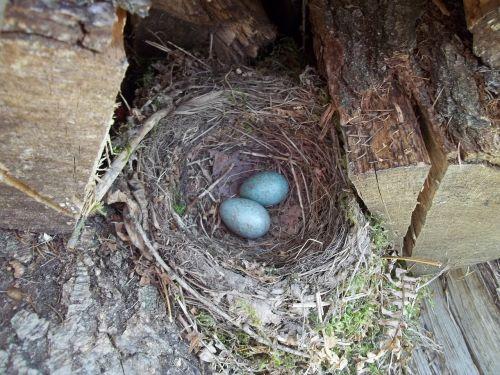 nest egg forest education