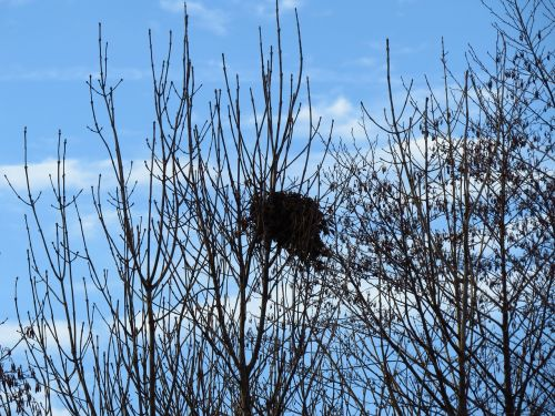 nest bird's nest nesting place