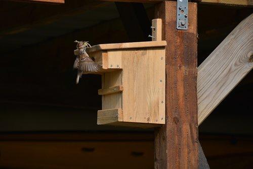 nest building  aviary  finch