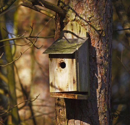 nesting box forest pine