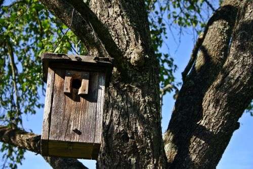 nesting box tree nature