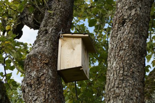 nesting box nest bird