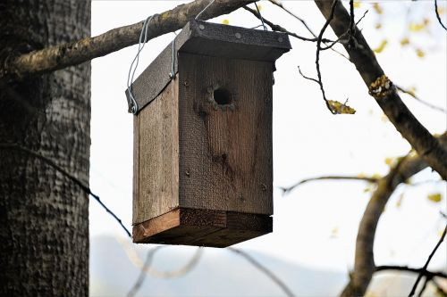 nesting box wood bat nest box
