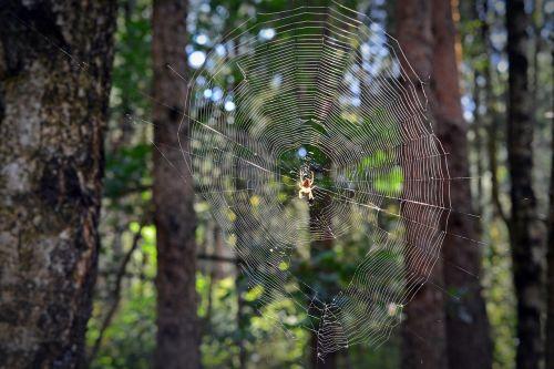 network spider cobweb