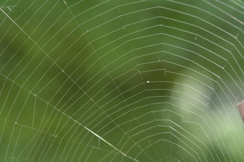 network cobweb spider