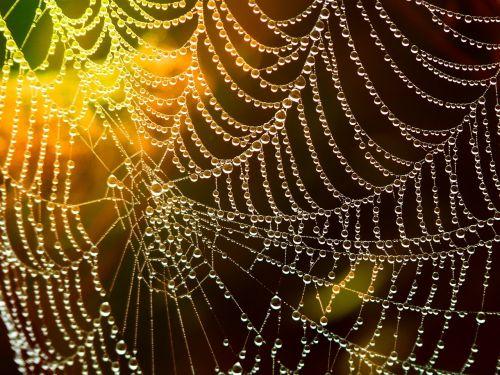 network cobweb dewdrop