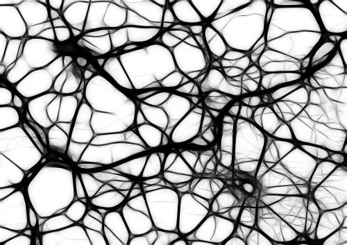 neurons brain cells brain structure
