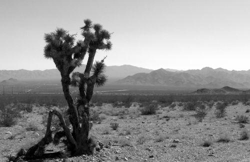 Nevada Desert Cactus Landscape