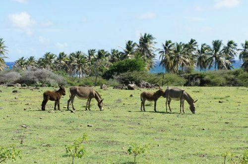 nevis st kitts caribbean island