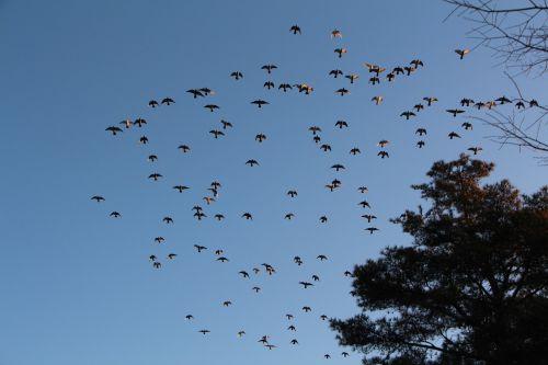 new ryanair new flock