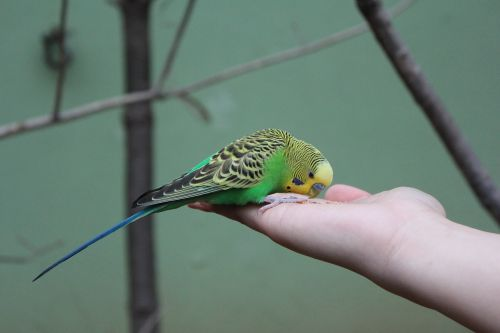 new parrot birds