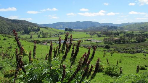 new zealand north island valley