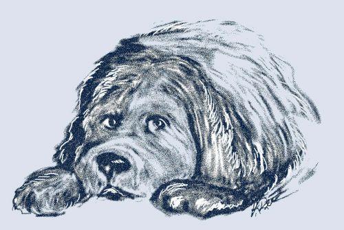 newfoundland puppy dog