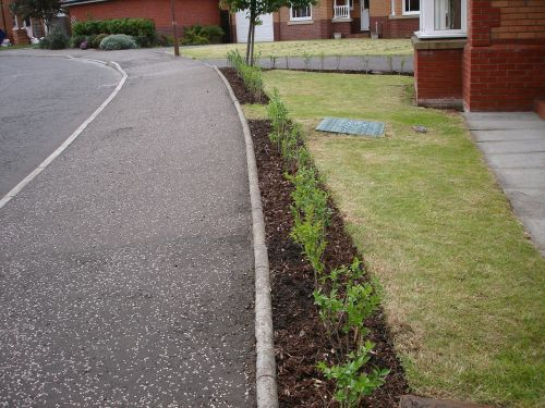 planted hedging green