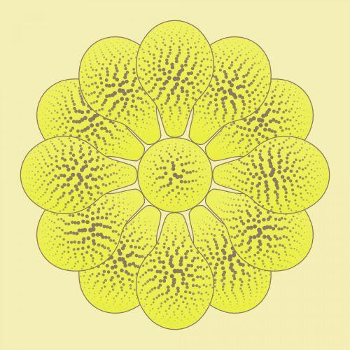 Nice Flower Yellow