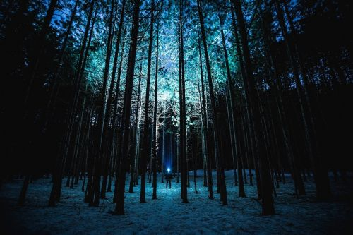 night forest trees