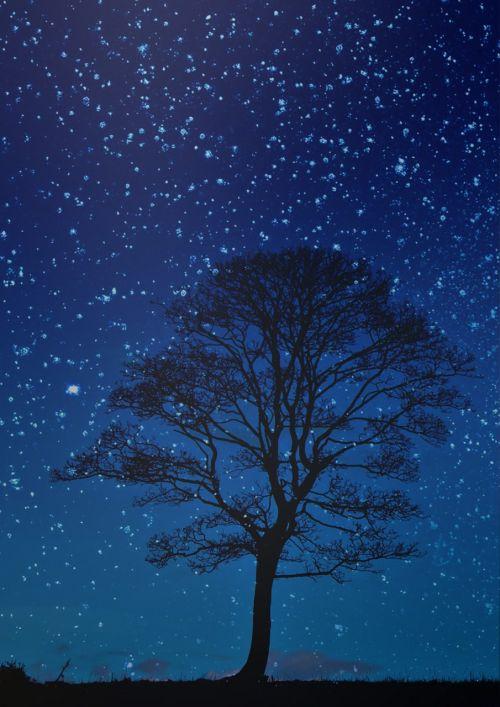 night tree night sky