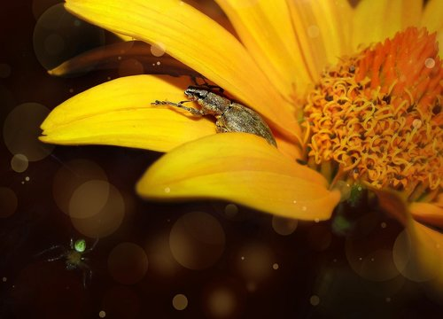 night  summer  flower