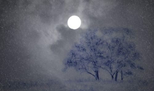 night wintry trees