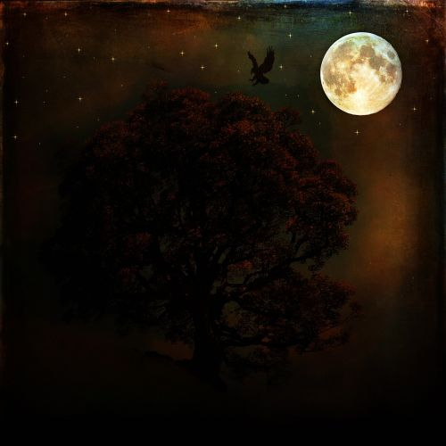 night,full moon,moon,dark,moonlight,tree,raven,bird,animal,mystical,darkness,painting,digital painting,art,digital art,free photos,free images,royalty free