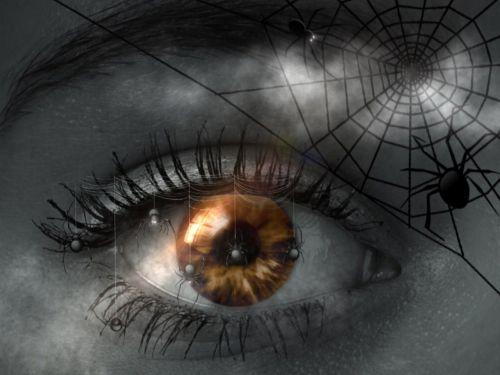 nightmare eye spider
