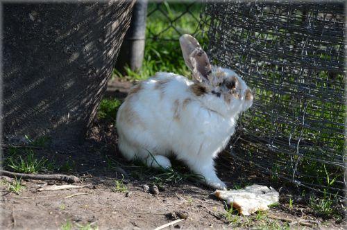 Bunnies 03