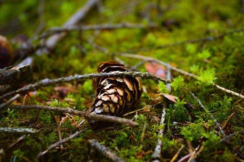nikon  nikon photography  forest
