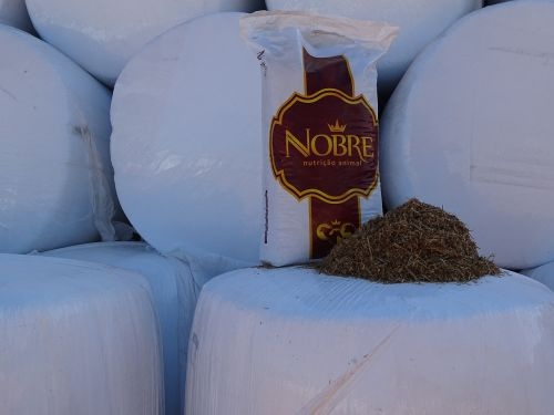 noble silage wheat