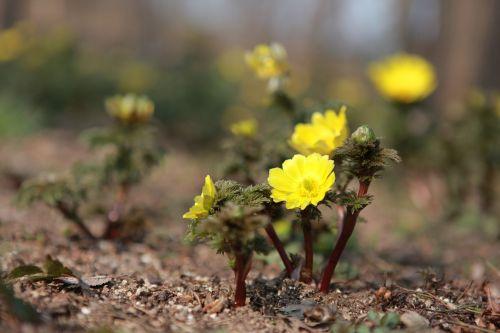 noel online gift shop nature plants