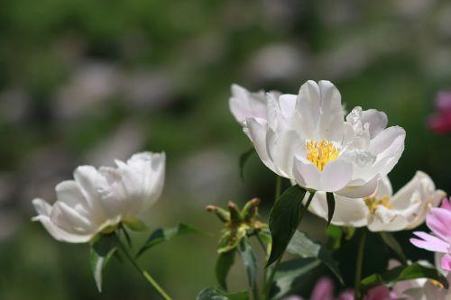 noel online gift shop flowers nature
