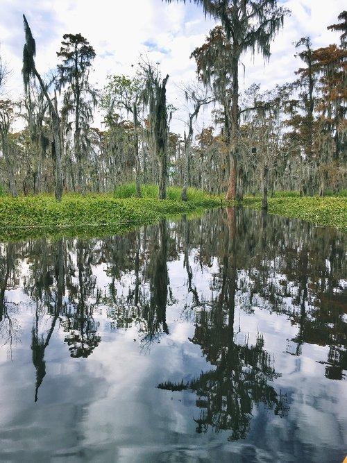 nola  wetland  tree