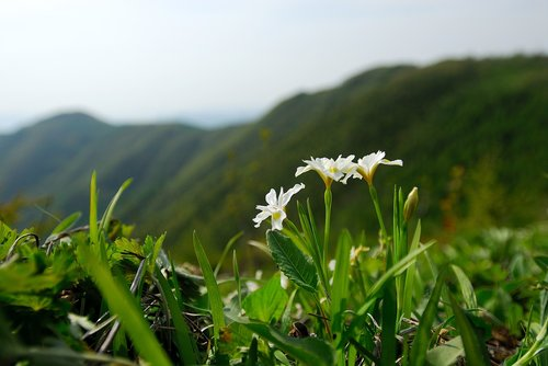 nora rubber sections above  wildflower  gangwon do