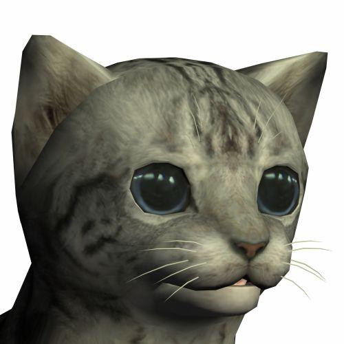 Normal Cat Head