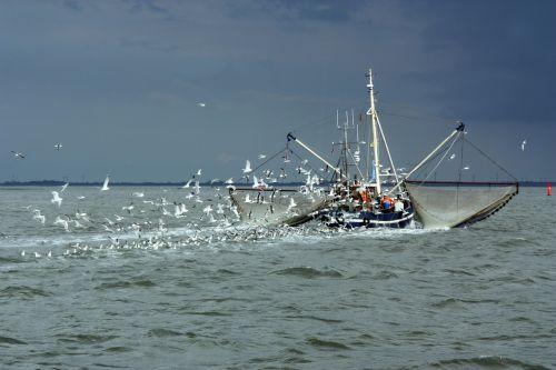 north sea fishing vessel gulls