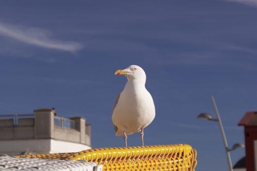 seagull north sea borkum